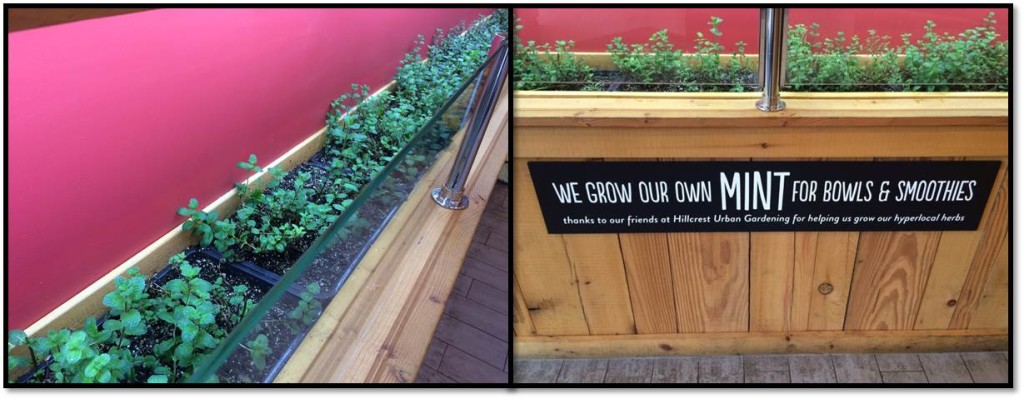 "Talk about ""locally sourced""! The mint for their smoothies grows right there in the restaurant. And it's pretty, too!"